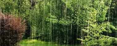 la pioggia nel pineto riassunto