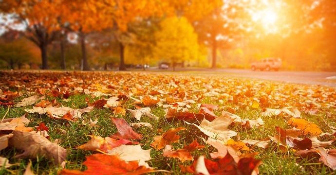 """autunno"""