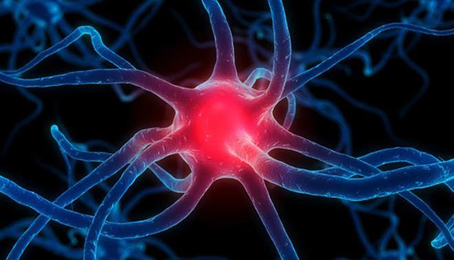 eufactor stem biologia