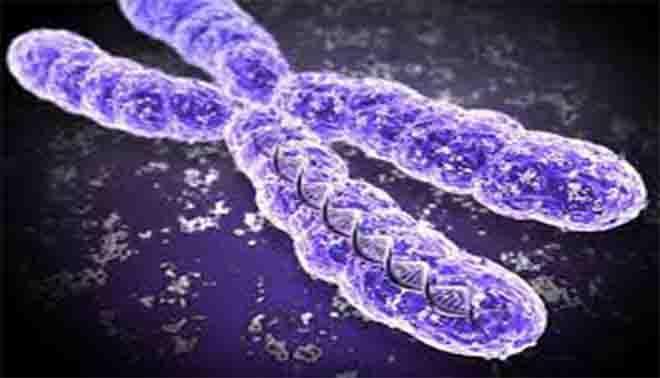 che cosa sono i cromosomi