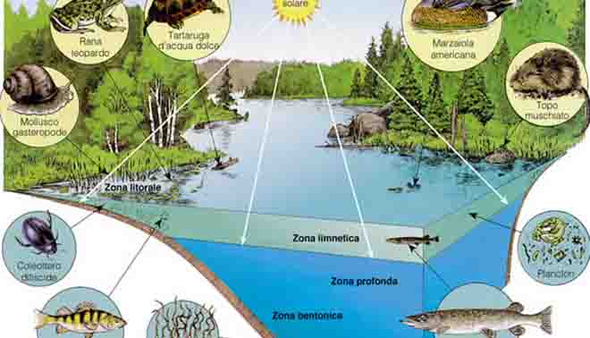 descrizione dell'ecosistema