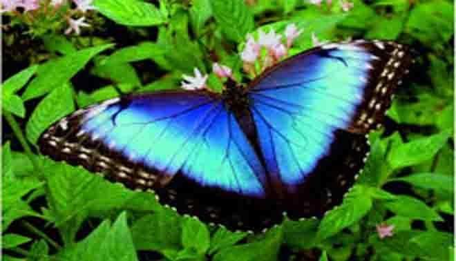 le farfalle e le falene