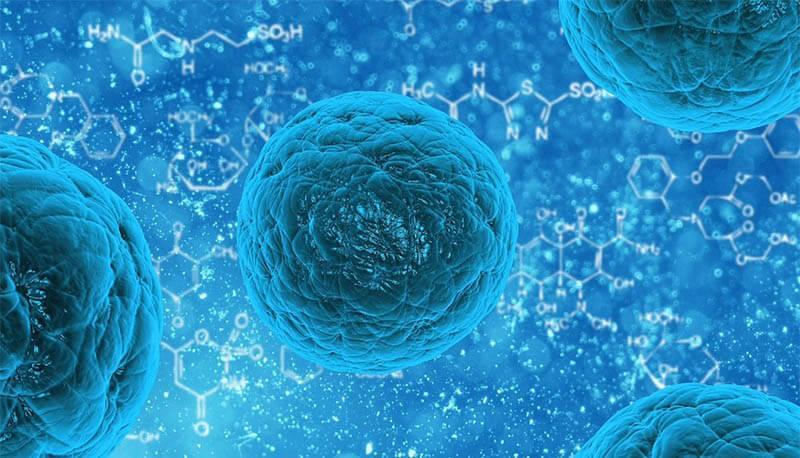 Test ingresso biologia e biotencologie Cisia e Tolc B