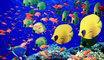 Ricerca pesce, scuola media