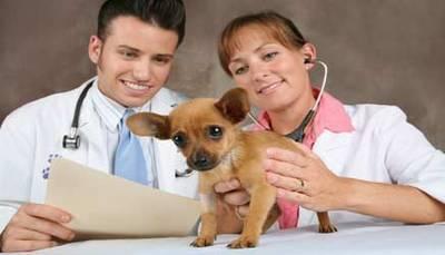 Test Veterinaria 2014: online i risultati