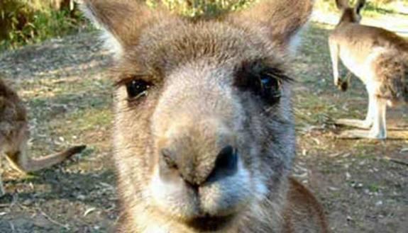 Maturità: tracce dall'Australia?