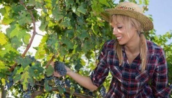 Liguria: soldi ai ragazzi per fare i contadini