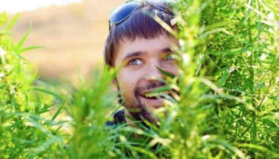Studenti coltivano marijuana per arrotondare