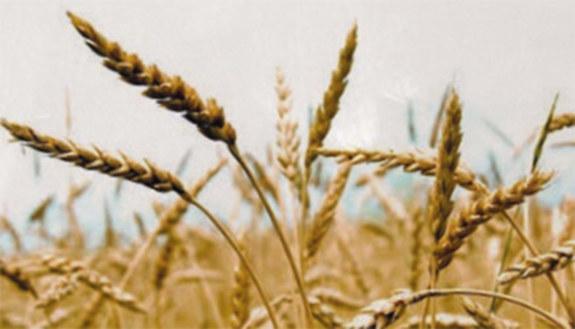 Settore servizi - Indirizzo Servizi per l'agricoltura e lo sviluppo rurale