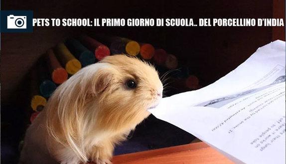 Pets to school, il primo giorno del porcellino