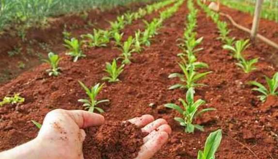 Seconda prova Agraria: simulazioni e guida Maturità