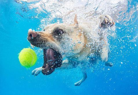 Le BUFFE facce dei cani mentre tentano di catturare la loro pallina in acqua