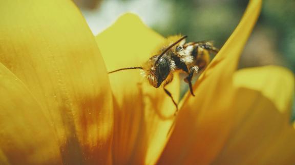 Europa: nasce la raccolta firme per salvare le api