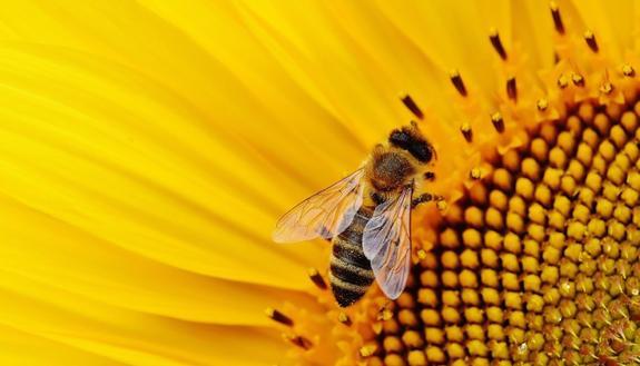 Adotta un alveare e salva le api dall'estinzione: puoi fare tutto online