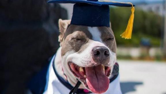 Laurea doppia per una studentessa e... il suo cane