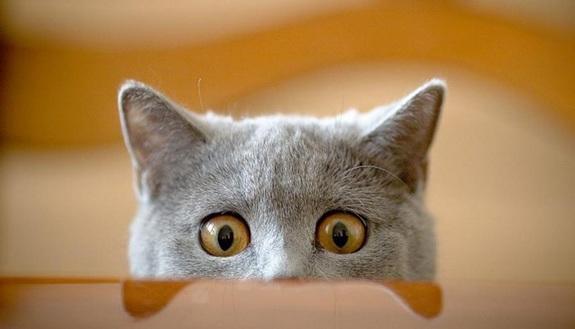 Conosci davvero il tuo gatto? Fai il quiz e scopri le curiosità
