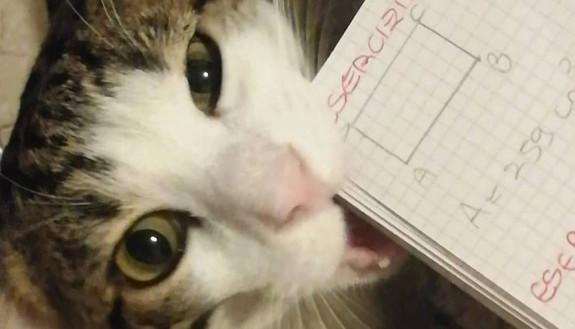 Scusi prof, ma i miei compiti li ha mangiati il gatto: le giustificazioni più assurde degli studenti