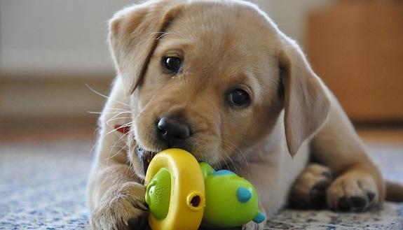 Stress da esami? Accarezzare un cucciolo ti salverà: lo dice la scienza