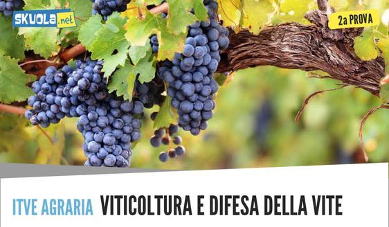 Traccia e soluzione Agraria, agroalimentare, agroindustria: seconda prova maturità 2018 viticoltura ed enologia