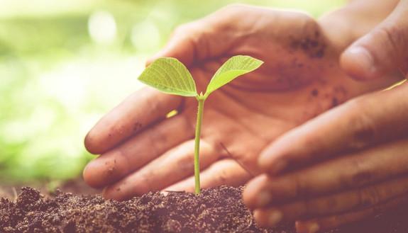 Materie maturità 2020 agrario