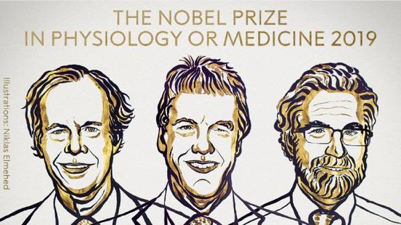 Nobel Medicina 2019 al 'respiro delle cellule': cosa hanno scoperto gli scienziati