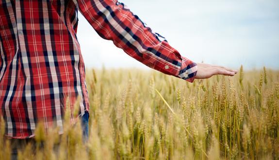 Servizi agricoltura e sviluppo rurale: simulazione seconda prova 28 febbraio maturità, tracce e soluzioni